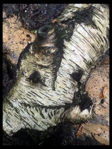 Log Bark