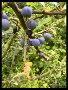More Sloes