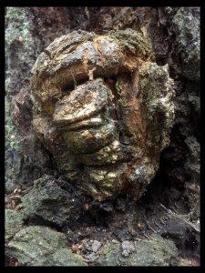 Oak Face