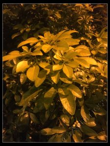 Plants by Street Light