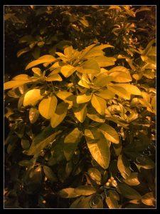 Plants by Street Light