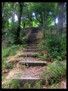 Steps In Woods