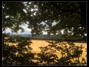 View Through Oaks