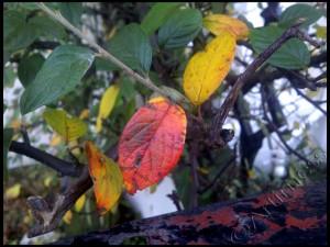 Autumn Leaves - 1/365